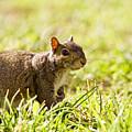 Spring Squirrel by Rachel Morrison