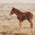 Spring Storm Foal by Kent Keller