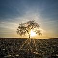Spring Sun Set by Sean Coffman