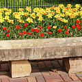 Spring Surrounds The Bench by Terri Morris