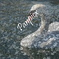 Spring Swan by Priscilla Richardson