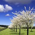 Spring Time #5 by Josh Manwaring
