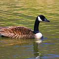 Spring Time Goose by Deborah Benoit
