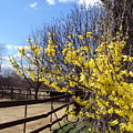 Spring Time by Line Gagne