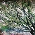 Spring Tree by Gray  Artus