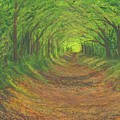 Spring Tree Tunnel by Stephen Riffe