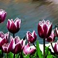 Spring Tulips 1 by Jim  Darnall