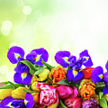 Spring Tulips And Irises by Anastasy Yarmolovich