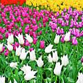 Spring Tulips Flower Field II by Artecco Fine Art Photography