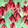 Spring Tulips - Photopower 3012 by Pamela Critchlow