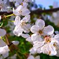 Spring White by Jasna Dragun