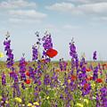 Spring Wild Flowers Meadow by Goce Risteski