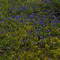 Spring Wildflowers by Garry Gay