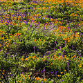 Spring Wildflowers by Greg Clure