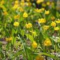 Spring Wildflowers by Julie Wyatt
