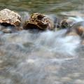 Spring With Rocks Nature Scene by Goce Risteski