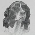 Springer by Harry Moulton