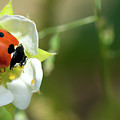 Springtime - Animals by PhotoGranary