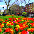 Springtime At Abingdon Square Park by Ed Weidman