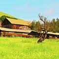 Springtime Barn San Francisco Bay by Gus McCrea