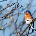 Springtime Blue by Heather Hubbard