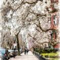 Springtime Boston Back Bay by Edward Fielding