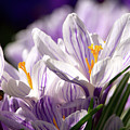 Springtime Color by Sharon Talson