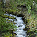Springtime Creek by Idaho Scenic Images Linda Lantzy