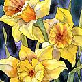 Springtime Daffodils by Teresa Ascone