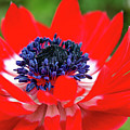 Springtime - Flowers by PhotoGranary
