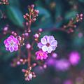 Springtime by Hanna Tor
