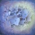 Springtime Hydrangea by Luther Fine Art