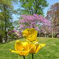 Springtime In Bridgeton Missouri by John Lautermilch