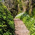 Springtime In Dorset by Susie Peek