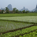Springtime In Guangxi by Michele Burgess