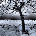 Springtime In Infrared by Don Zawadiwsky