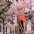 Springtime In Lincoln Park by Lisa Richards