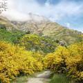 Springtime In New Zealand by Joan Carroll