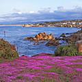 Springtime In Pacific Grove by Charlene Mitchell