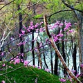Springtime In The Mountains 2 by Kathy Barney