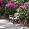 Springtime In The Park by Susanne Van Hulst