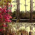 Springtime In The Swamp by Susanne Van Hulst