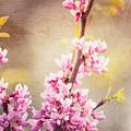 Springtime by Kelley Freel-Ebner