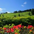 Springtime Landscape by Gaspar Avila