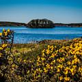 Springtime On Lake Knockalough by James Truett