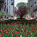 Springtime On Park Avenue by Robert J Caputo