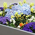 Springtime Planter by Terri Morris