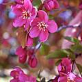 Springtime Romance by Alicia Espinosa