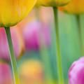 Springtime by Silke Magino