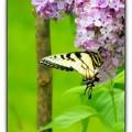 Springtime Splendor by Beverly Canterbury